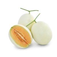 Orange Melody Melon (Hybrid) Seeds