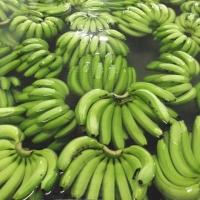 Fresh Green Aqua Banana