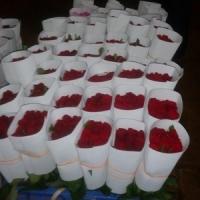 Tajmahal/Fresh Cut Roses