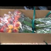 Fresh Gerbera Cut Flower