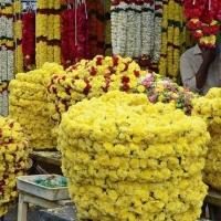 Marigold Cut Flower