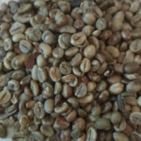 Robusta Coffee Bean (Second Grade)
