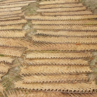Dry Coconut Woven Leaves