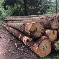 title='Spruce Logs'