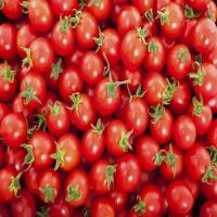Fresh Red Premium Grade Cherry Tomatoes