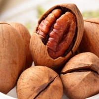 Pecan Nuts / Raw Pecan/ Shifted Pecan Nut