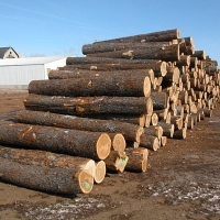 Oak Wood Logs