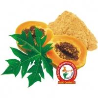 Papaya leaf Dry Extract