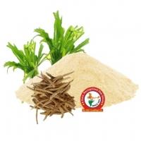 Safed Moosli Dry Extract