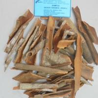 Broken Cassia Vietnam