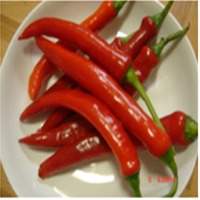 Fresh Big Red Chilli