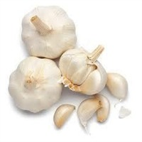 Fresh Garlic or White Garlic