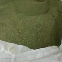 Green Seaweed - Ulva lactuca