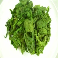 Ulva Lactuca or Green Seaweed