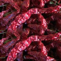Byadgi Dried Red Chilli