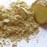Ginger Powder : Manufacturers, Suppliers, Wholesalers and