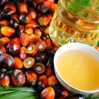 Refined Palm Oil and Crude Palm Oil