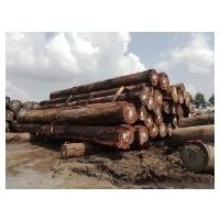 Suriname Hardwood