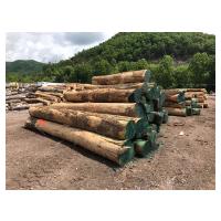 American Hardwoods