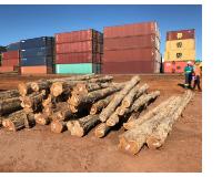 Teak Logs or Teak Wood