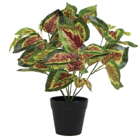 Artificial Coleus Hybridus Plant In Pot