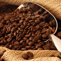 Arabica and Robusta Green Coffee Beans